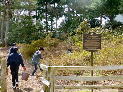 Heritage rhododendron beds near Brueckner plaque get spring cleaning from volunteers.