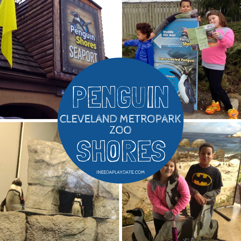 Penguin Shores at Cleveland Metroparks Zoo | iNeedaPlaydate.com