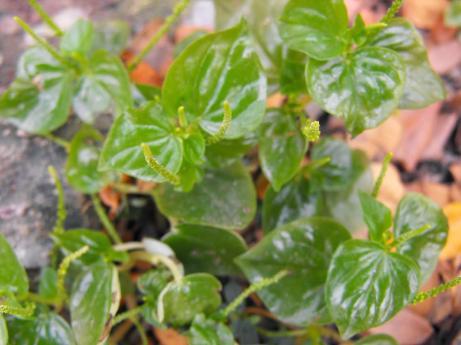 Pugad Baboy   Wikipedia