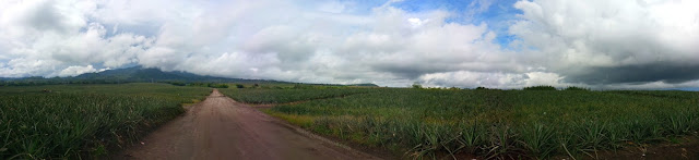 panorama view of the Dole Philippines Pineapple Plantation in Polomolok South Cotabato