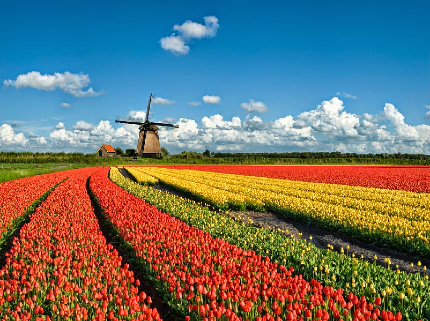 Reason to visit the Netherlands