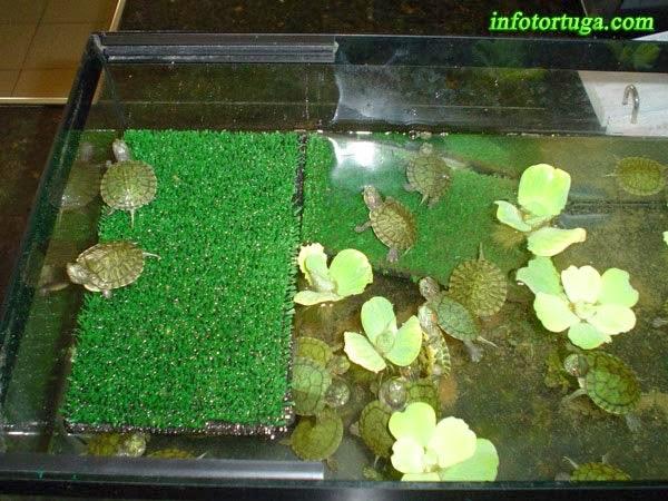 Estanques para tortugas de agua vulnera se puede for Acuario tortugas