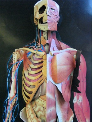 Anatomy and Physiology - Bacher\'s Page