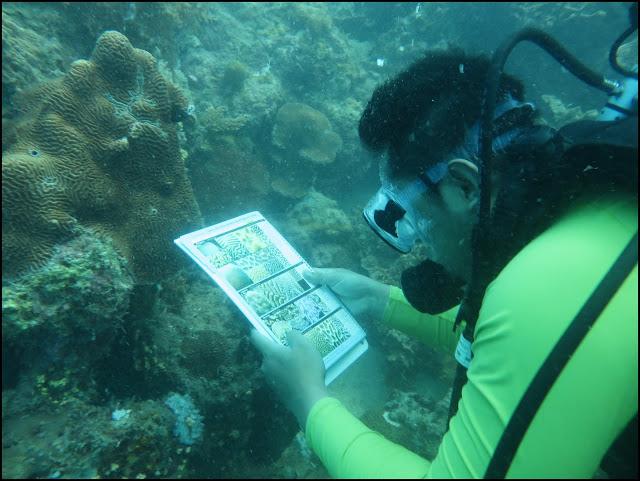 Coral Finder, Cara Mudah Mengidentifikasi Karang