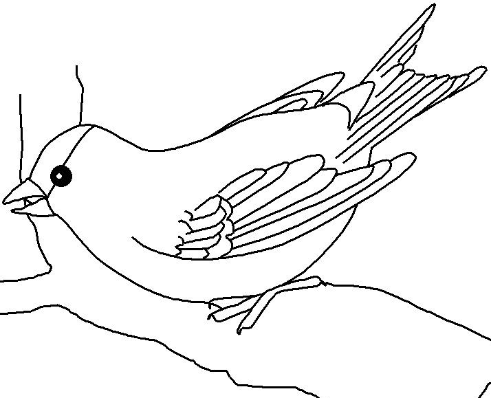 indiana bird coloring pages - photo#4