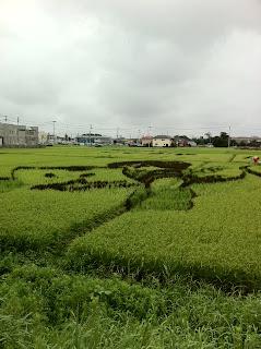 越谷市こしがや田んぼアート2011ゲゲゲの鬼太郎&ガーヤちゃん(91日目)