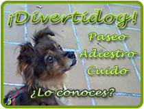 ¿Conoces Divertidog?