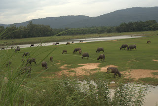 Ujrzeć Mekong i wrócić szlakiem Khmerów 49