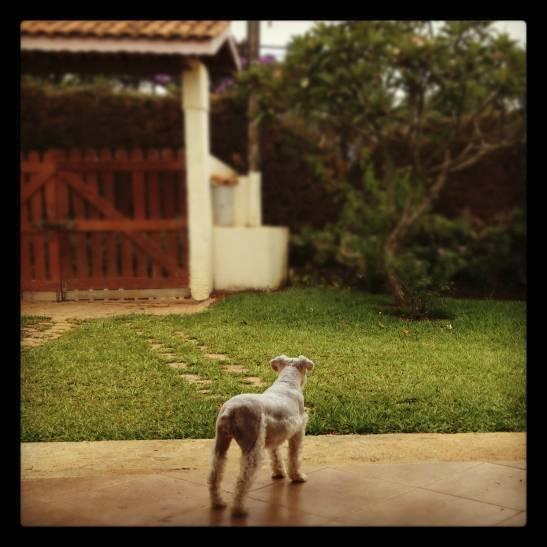 casa e cachorro