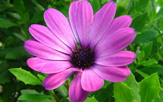 Wonderful Flower Wallpaper
