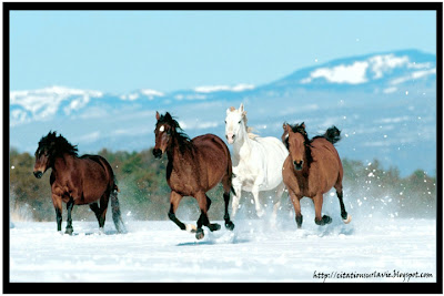Citation sur cheval