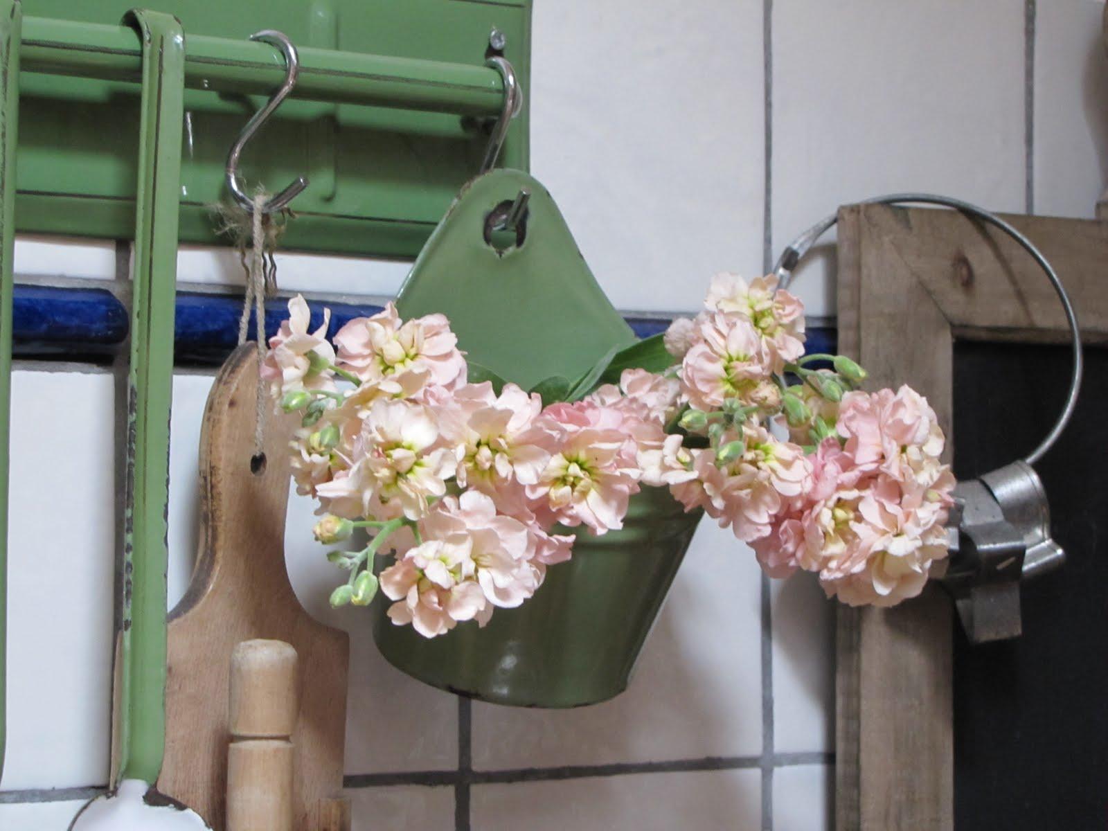 Onder de knotwilg: bloemetje op woensdag