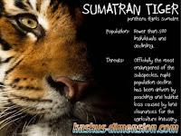 Menyelamatkan Harimau Sumatera
