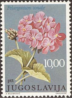 1977 Pelargonium zonale, Jugoslavija