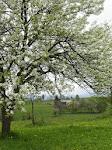 Primăvara în satul Filpea