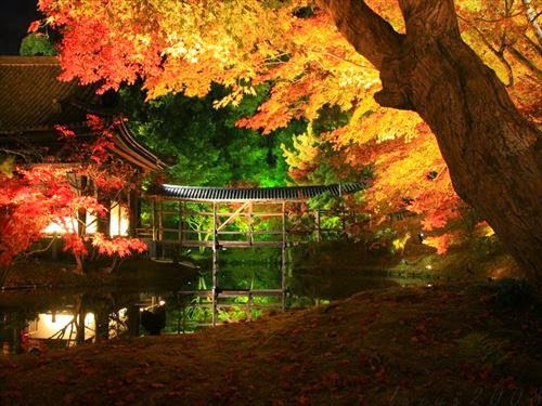 高台寺・圓徳院 特別拝観とライトアップ