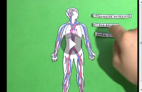 Del Sistema Circulatorio Para Niños Sistema Circulatorio Para