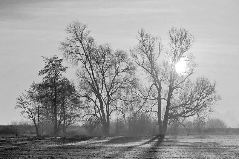 Mgły na Mazowszu