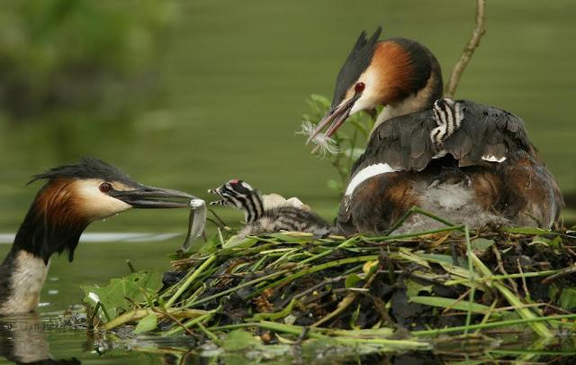 Amazing Wildlife Photography