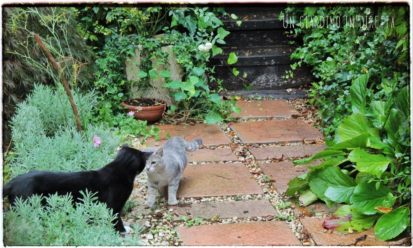 Lavori in giardino con gatti un giardino in diretta - Lavori in giardino ...