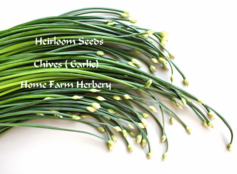 garlic+chives.jpg