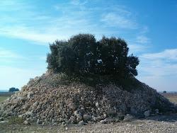 El árbol de las piedras