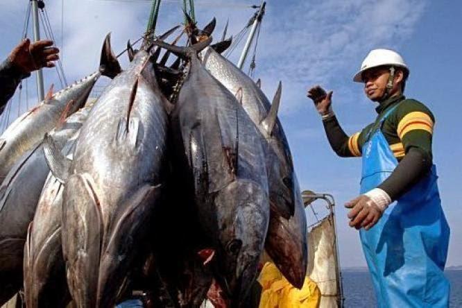 Indonesia, Timor Leste dan Australia Sepakat Kelola Laut Arafura dan Timor