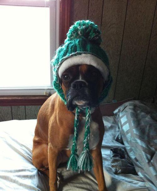 Fotos de perros muy divertidas