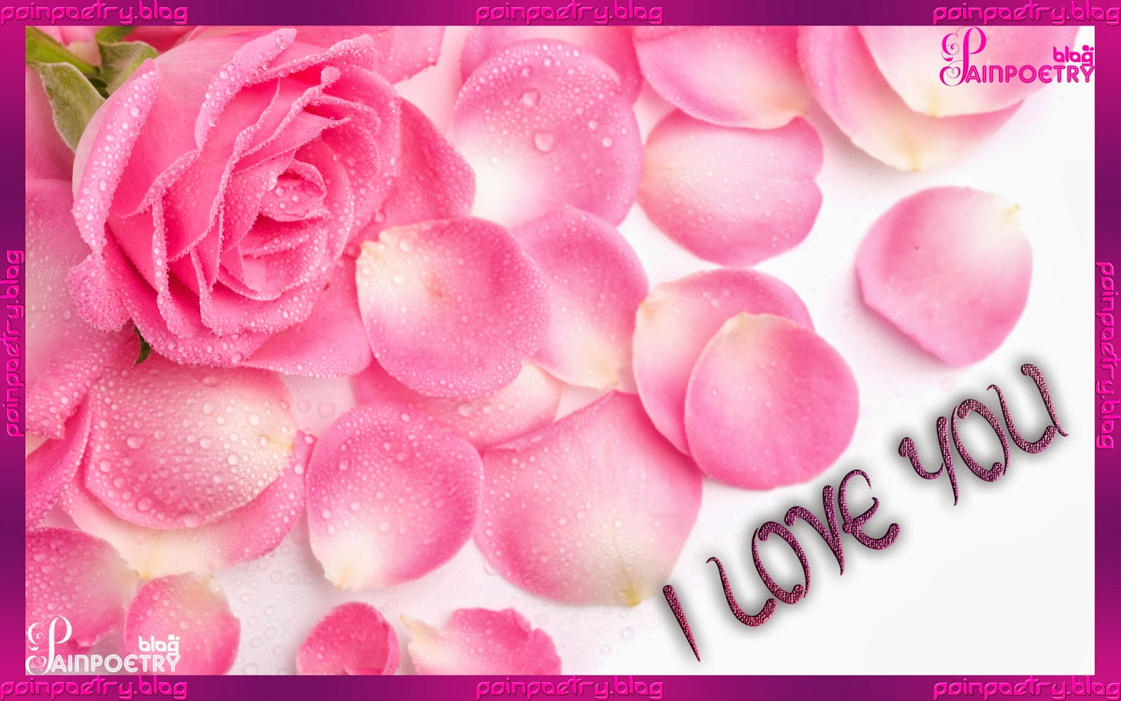 Love-Wallpaper-With-Pink-Rose-And-Petal-Image-HD-Wide