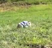 Comel Tengok Anak Anjing ni dia main golek golek Tepi bukit