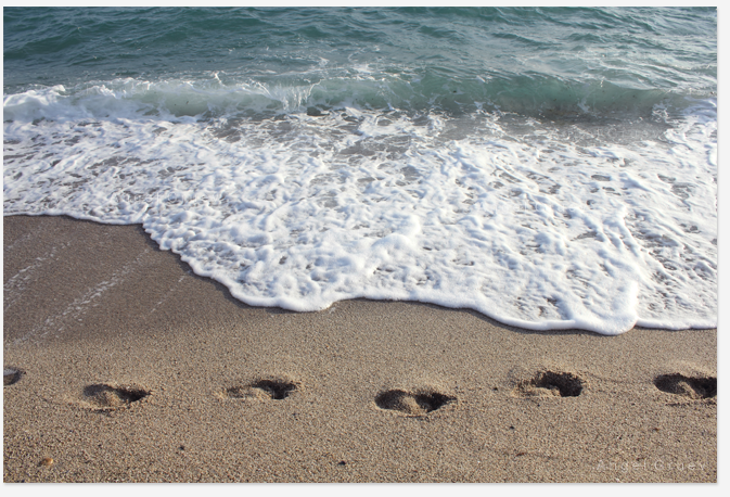 Summer,picture,sea sand,buy summer photograph,summer foto,foots step,sea sand