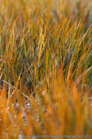 Gorgeous golden garden grasses photograph