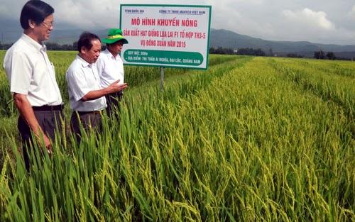 Hội nghị sơ kết đánh giá kết quả triển khai các dự án khuyến nông về sản xuất giống lúa vụ Đông - Xuân 2014 - 2015 các tỉnh phía Nam