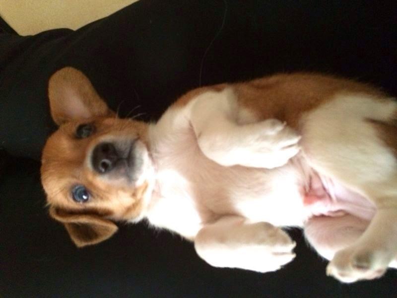 Adotta un cane a siracusa adottati cuccioli incrocio for Pincher cucciolo