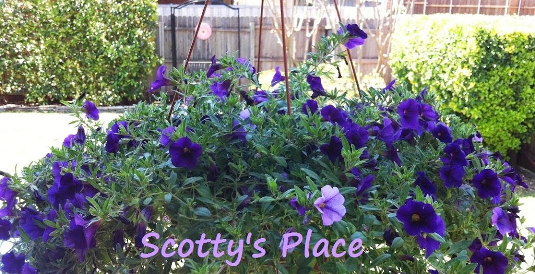   Scotty&#39;s Place