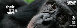 Help Save Great Apes
