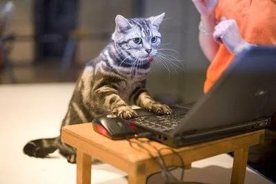 Adiestrar tu mascota - Adiestrar un gato
