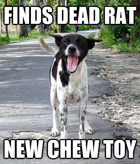 Bear In Mind That The Rat He Found Was Probably Dead