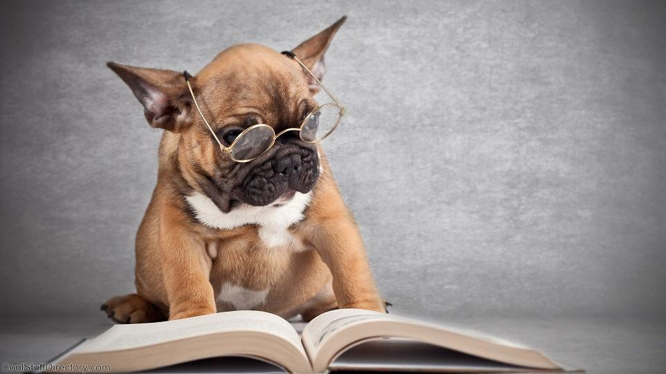 Pictures of Dogs Reading Books