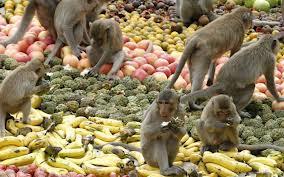 festival monyet