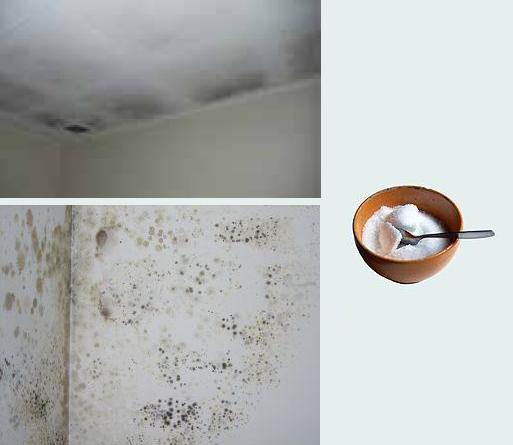 Renovables sin limites soluciones reales para tu casa - Casa con humedad ...