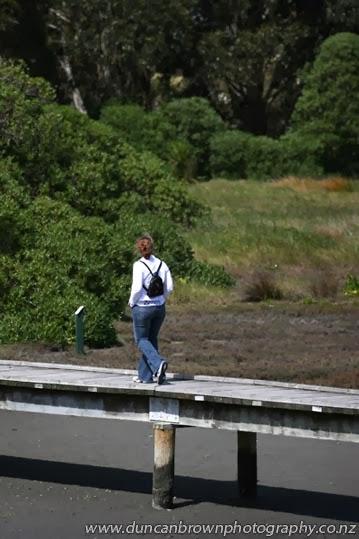 Ahuriri Estuary, Napier, an easy 60 minute walk photograph