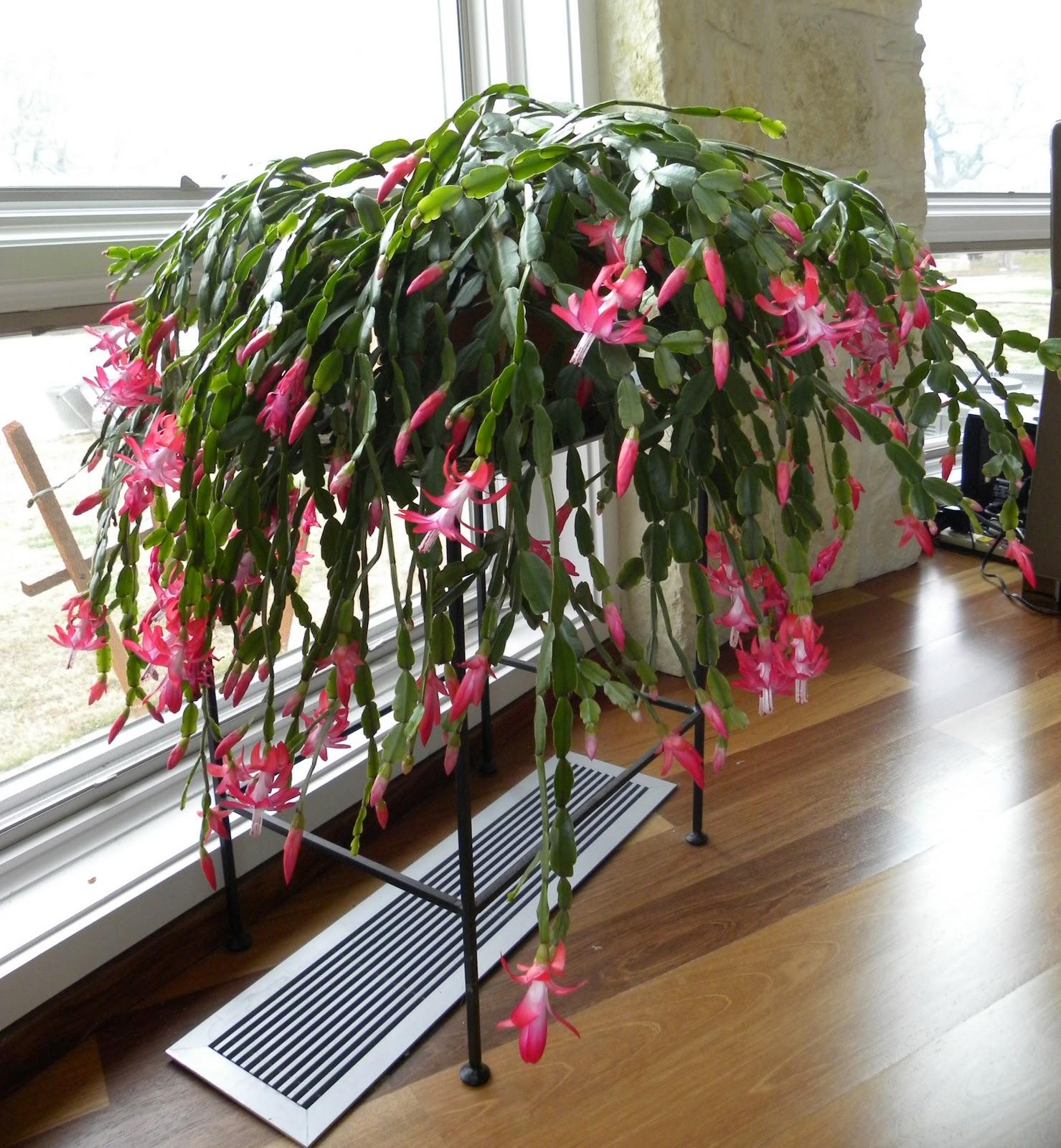 diane u0027s texas garden garden blog bloom day