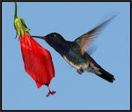 Néctar ... sabedoria e renovação...