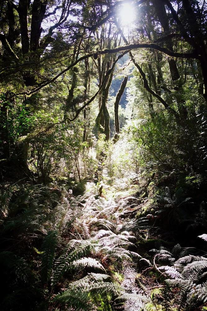 Diamond Lake New Zealand Hike