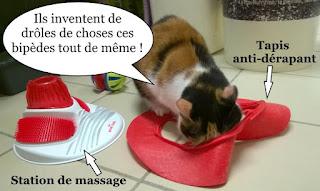 Chatte tricolore et station de massage.