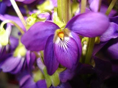 Cute houses decorar con violeta morado o p rpura - Cual es el color anil ...