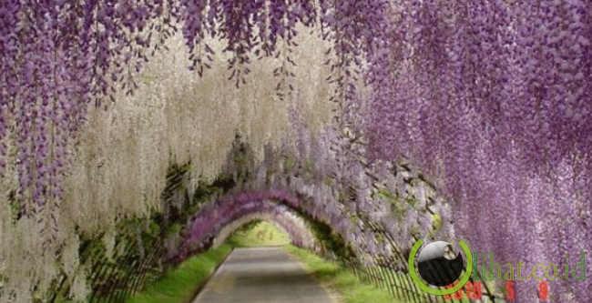 10 Terowongan Pohon yang Paling Menakjubkan di Dunia
