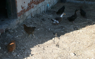 Our flock, flocking