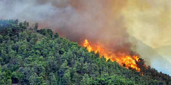 Presiden SBY : Para Pembakar Itu Penjahat Kemanusian